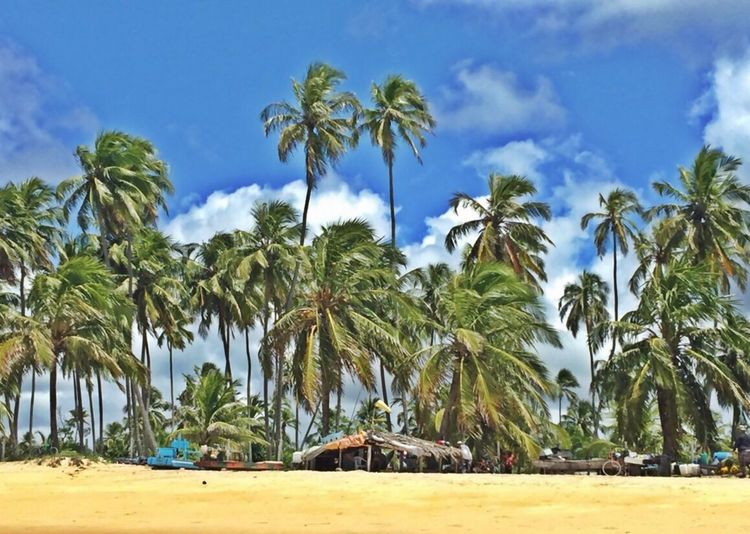 Beach Living Northeast Of Brazil Beach In Recife Rota Dos Coqueiros Simple Moment Beautiful Colours.... Rota Dos Coqueiros Pernambuco Brazil Coconut Trees Beach Life Simple Life Fisherman Man Of The Water Simplicity Coconutwater Great Outdoors