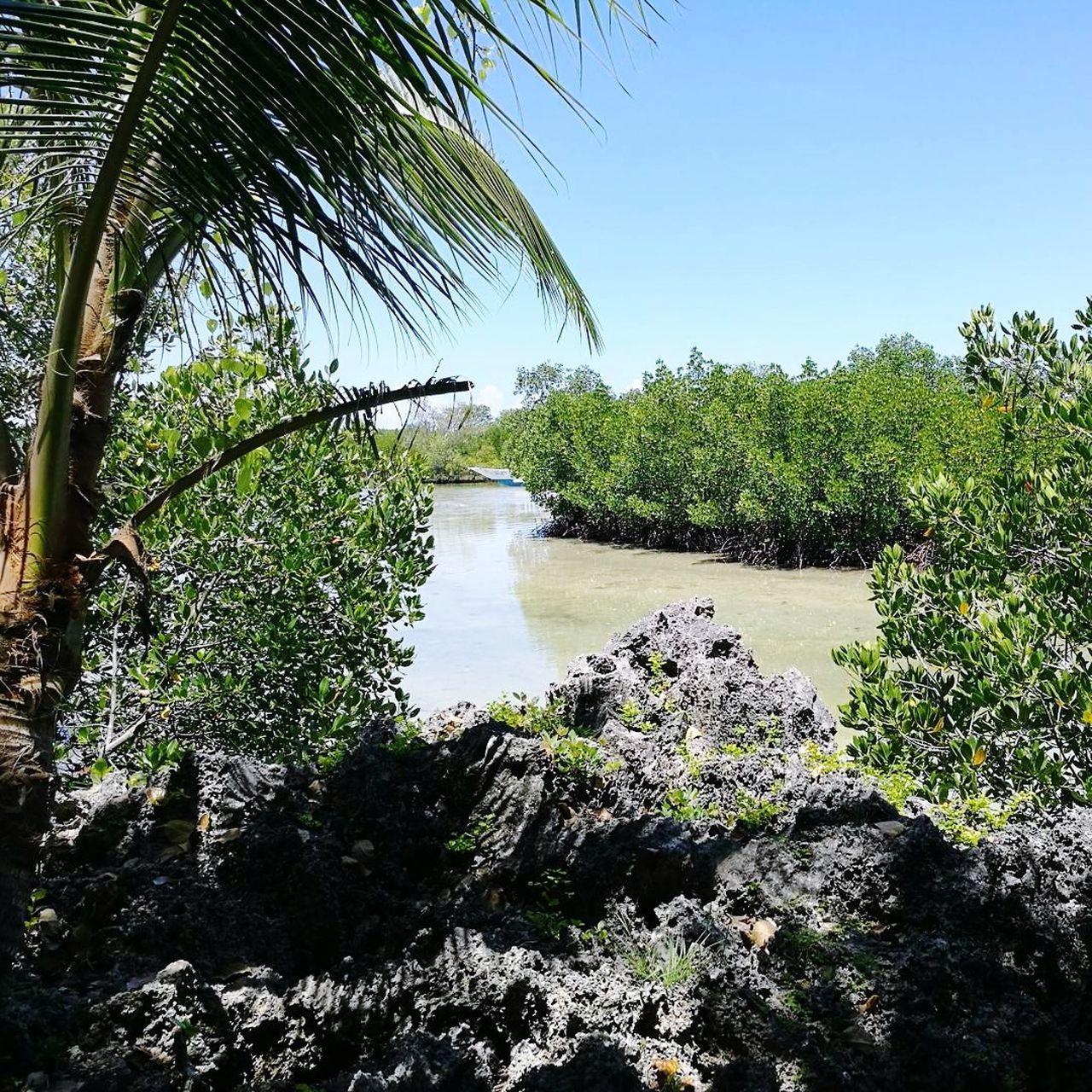 Tree Water Nature Mangroves Beauty In Nature EyeEmNewHere