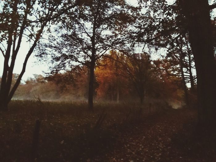 Misty Evening Walk In The Forest Autumn Colors