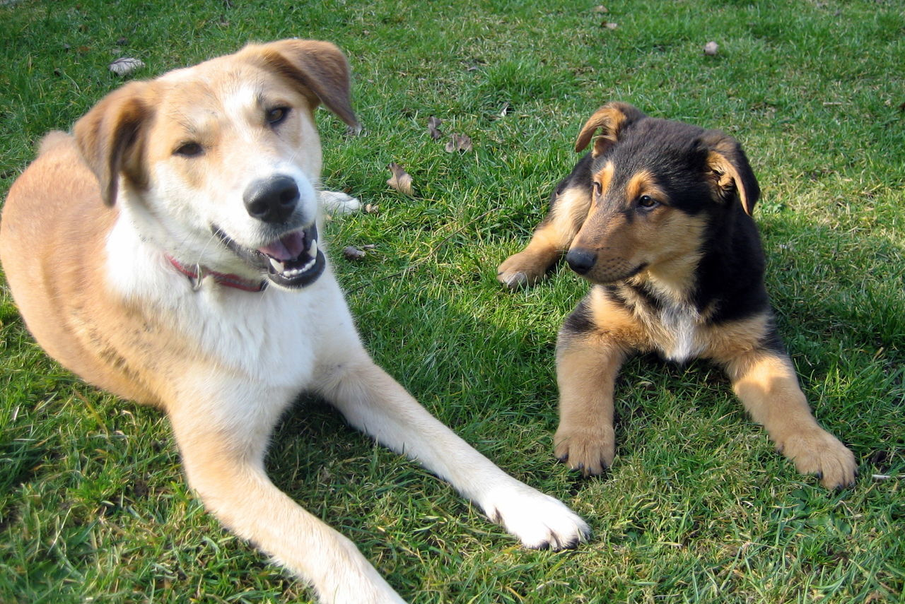 Lissy Und Elvis Hundeleben Hunde Liebe ♡ Hunde Dogs Dogs Of EyeEm Dogslife Dogslover Dogfriends Animal Photography Animal_collection Hundefotografie