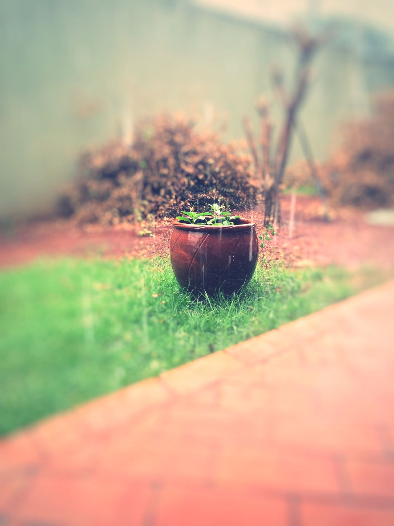 Plant Growth Nature Grass No People Green Color Outdoors Close-up Day Freshness
