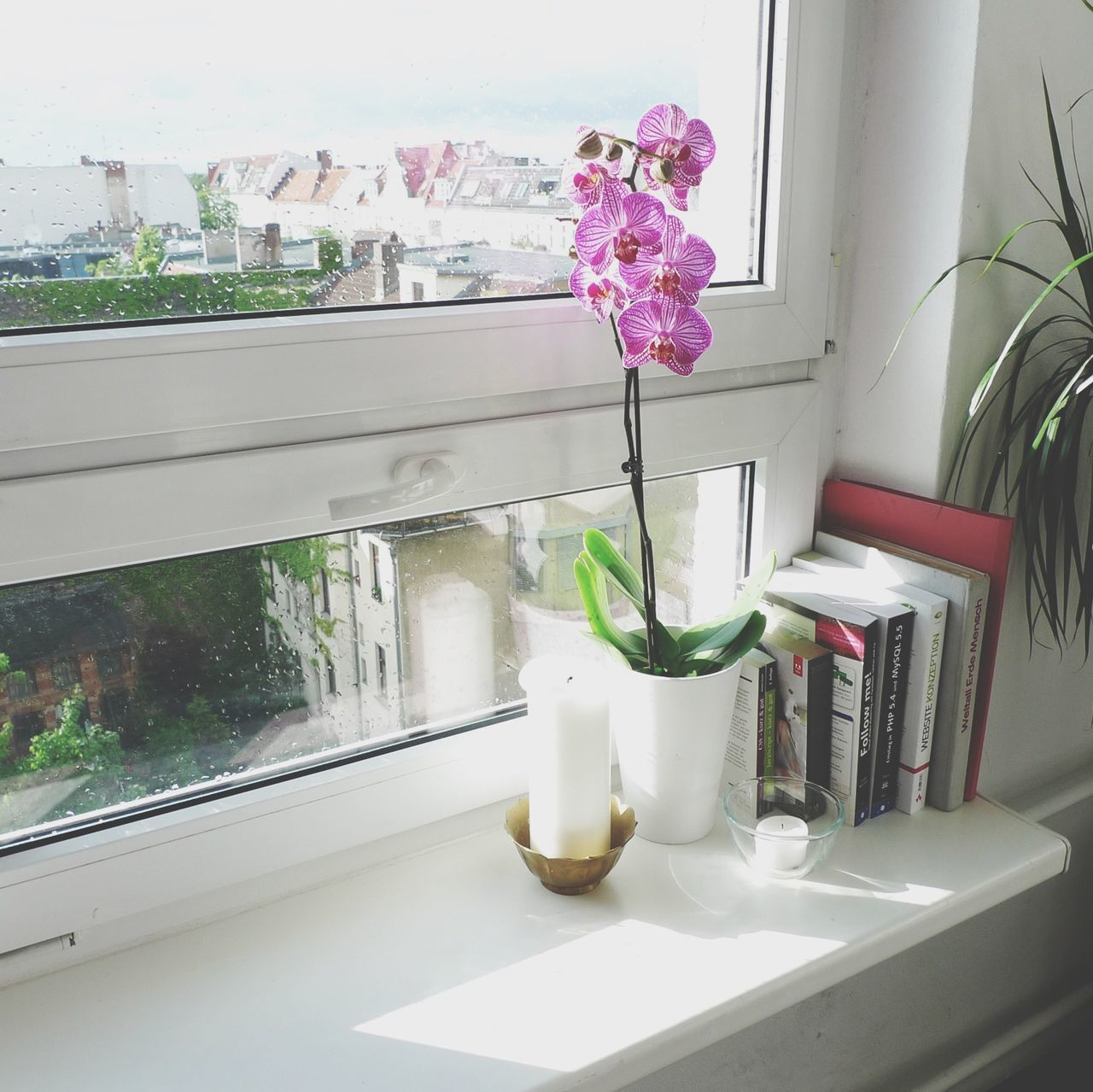 Beautiful stock photos of orchid, Berlin, Day, Domestic Room, Flower