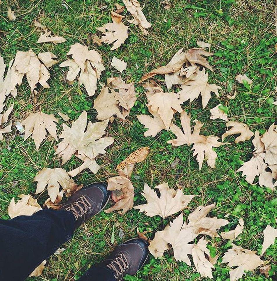 Winter is coming Istanbul Zharipxistanbul Istanbulhayatım Istanbuluniversitesi Türkiye Sonbahar Winteriscoming