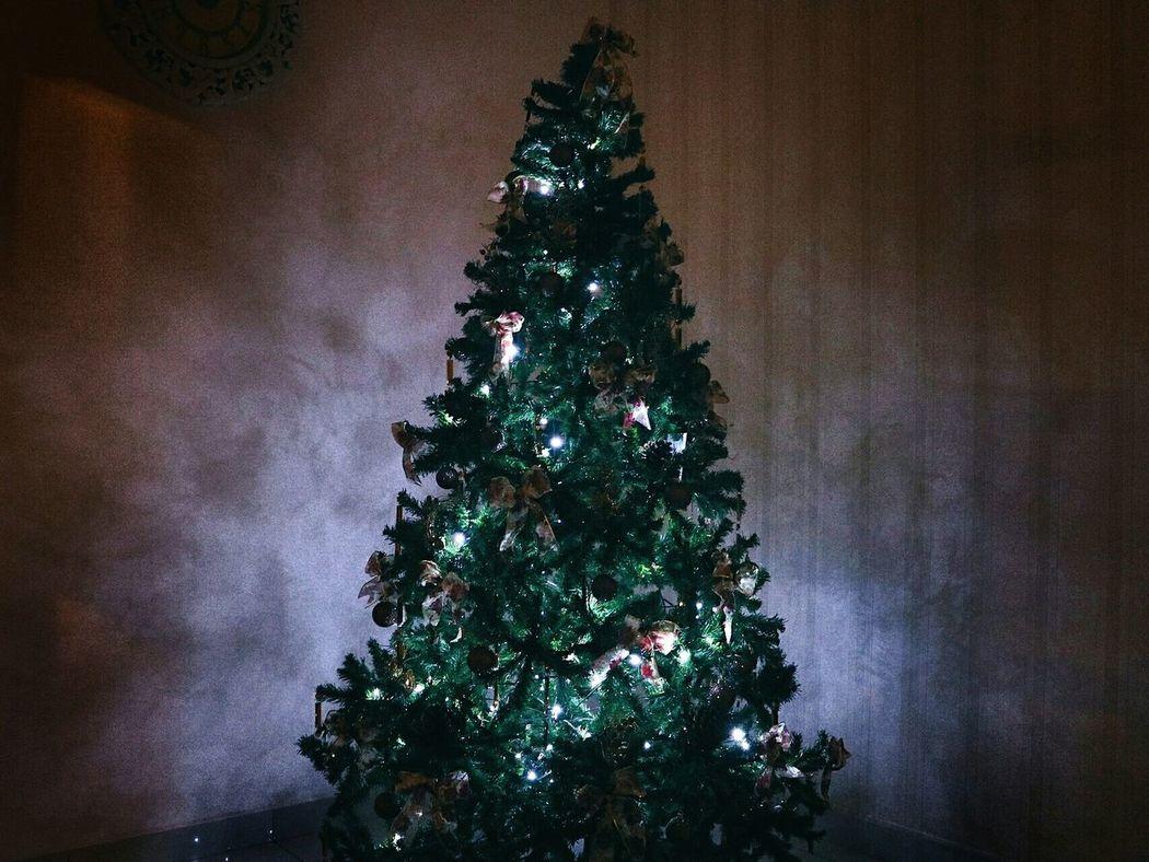Christmaslight Bulb Dark Nature