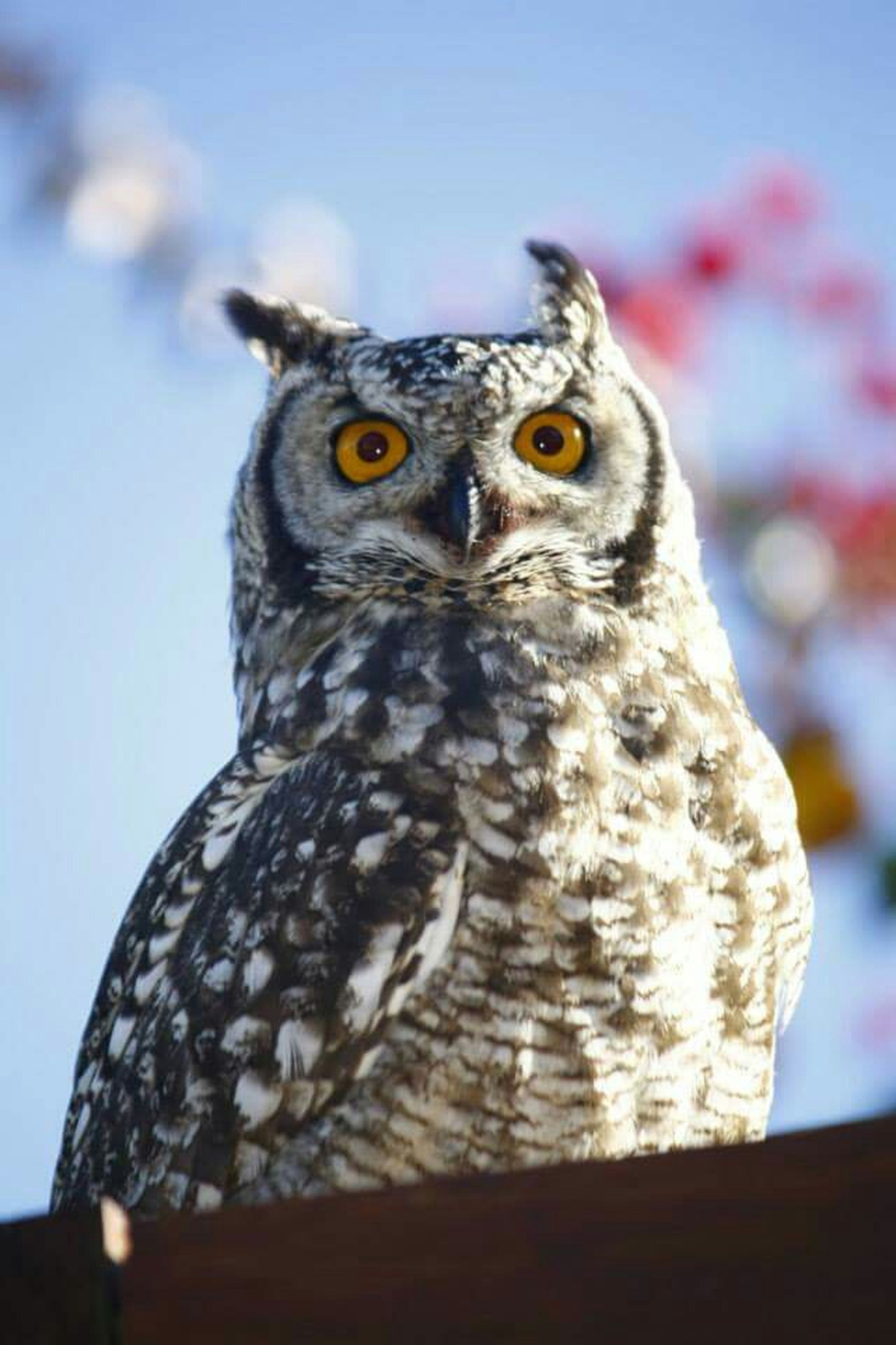 animal themes, one animal, bird, animals in the wild, wildlife, focus on foreground, bird of prey, close-up, perching, owl, animal head, beak, looking away, low angle view, portrait, nature, outdoors, day, no people