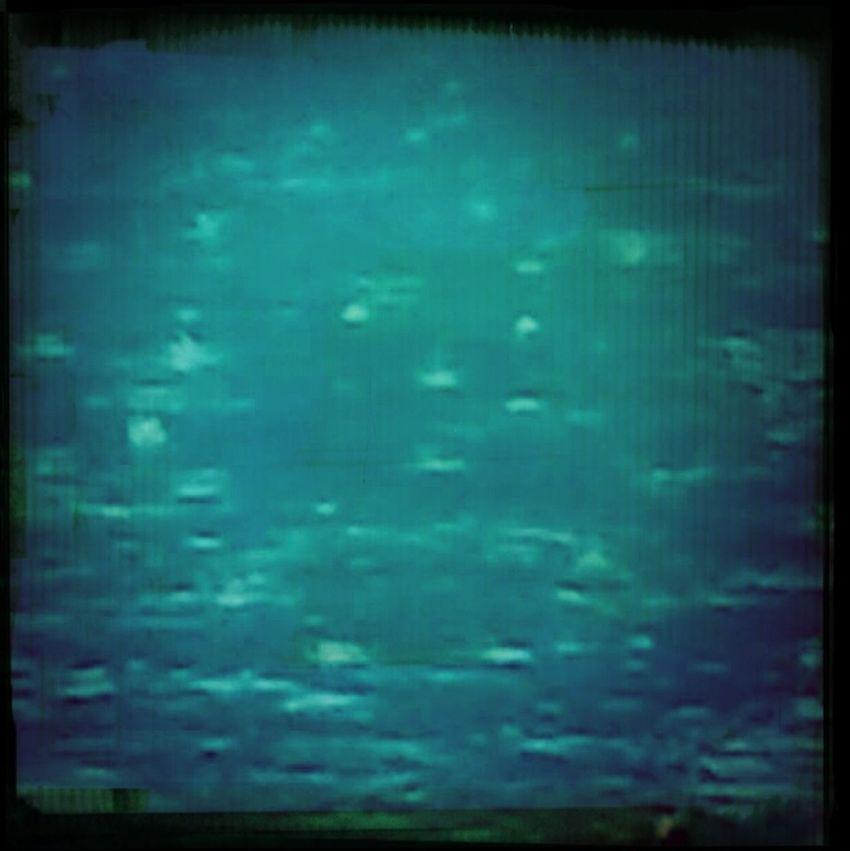 Zoomarine Swimming