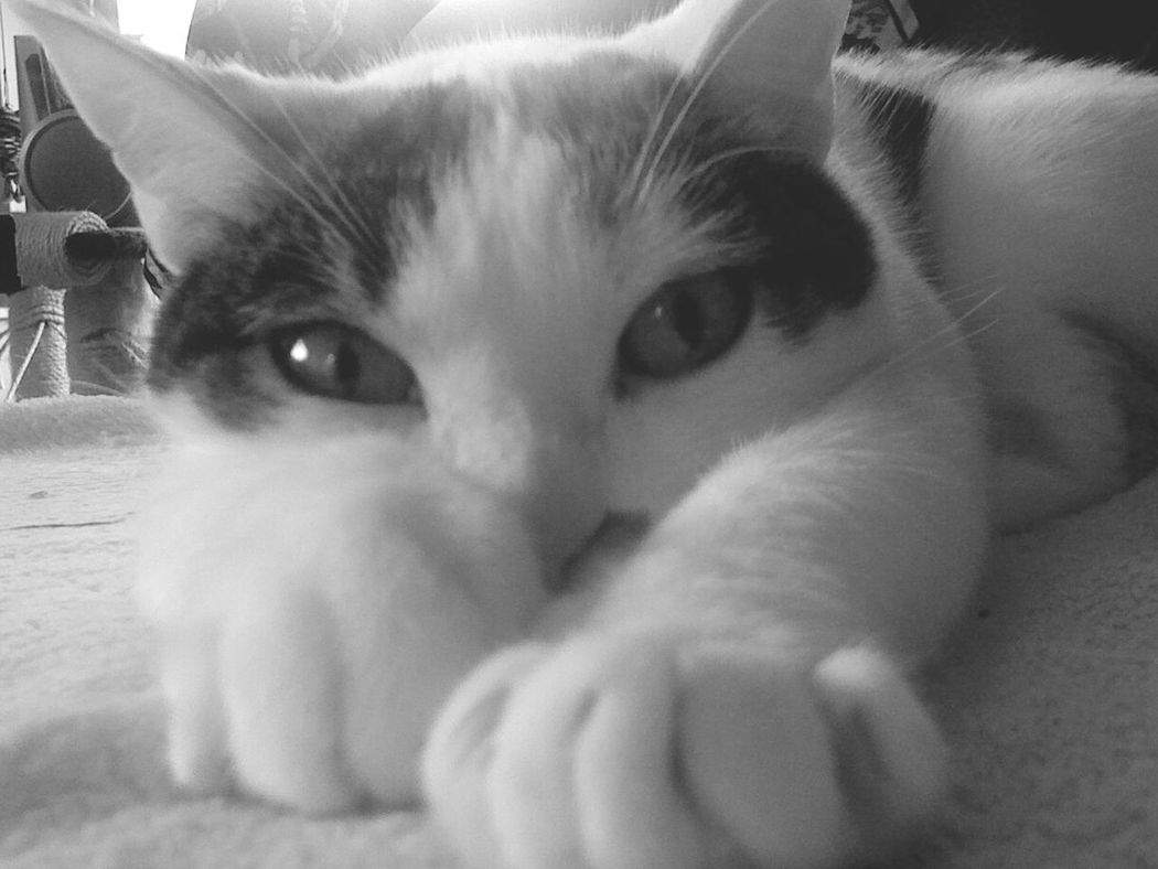 Blackandwhite Photography Cat Lovers Cat_collection At Home Nature's Diversities