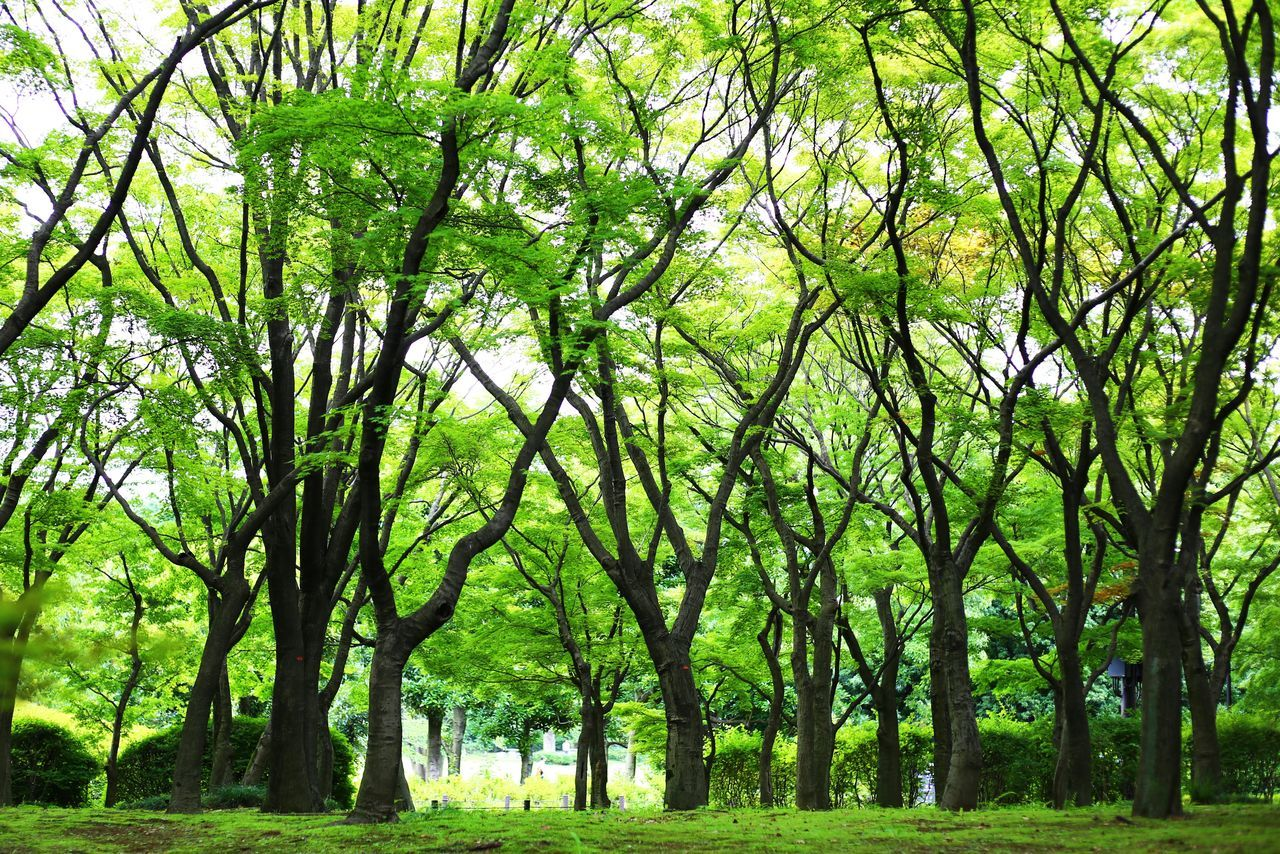 2015  Beauty In Nature Forest Green Color Growth Japan Landscape Lush - Description Nature Outdoors Tokyo Tree 北の丸公園 皇居