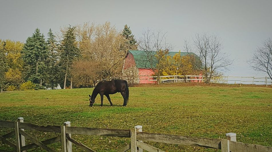 Taking Photos Animals Nature Fall Season grazing horse Enjoying Life
