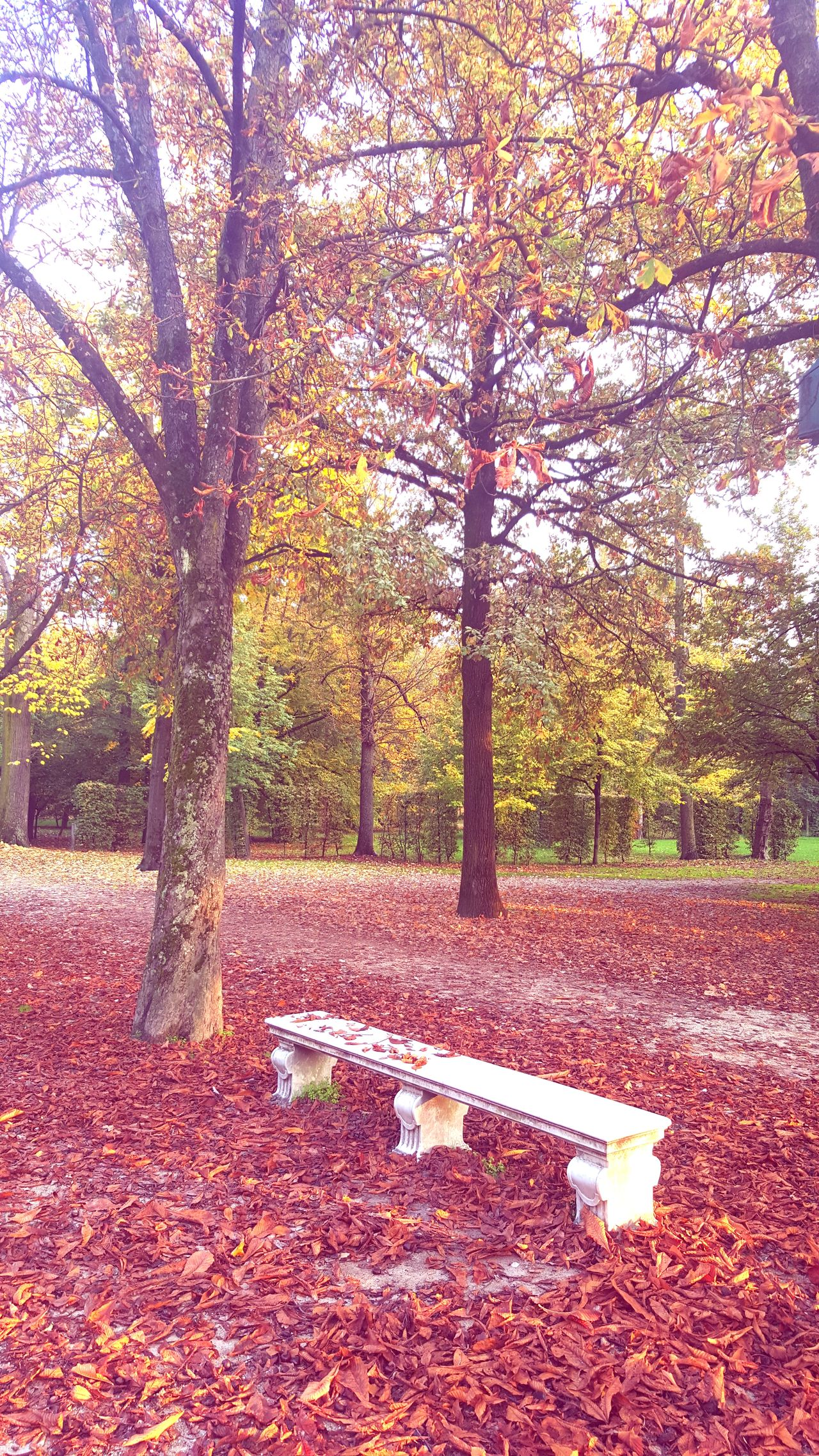 Autumn Tree Day Outdoors Leaf No People Change Nature Sky Red Panchina Parco Park Ducale