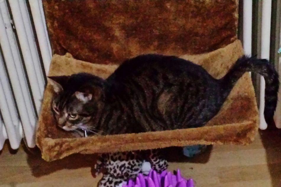 Domestic Animals Domestic Cat My Cat😺🐈 Cat Cat Photography Cat♡ Il Mio Gatto Gattomeraviglioso My Cats Locarno, Switzerland My Cats❤️ Mycatisthebest Gatto Cats 🐱 Gatti Domestici Feline Mycat Cat Lovers