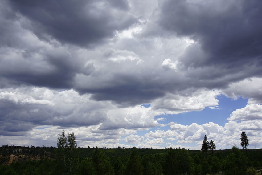 Cloud - Sky Dramatic Sky Cloudscape Tree Sky Storm Cloud Landscape Beauty In Nature Nature Outdoors Tranquility