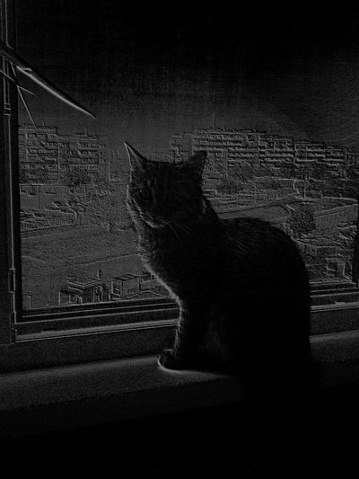 cat Window First Eyeem Photo