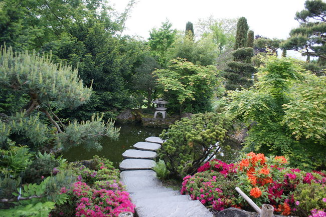 Asian Garden Asian Gardens Asian Park Lush Foliage Relaxing Moments Stepping Stones Stone Path Tranquility Water Garden