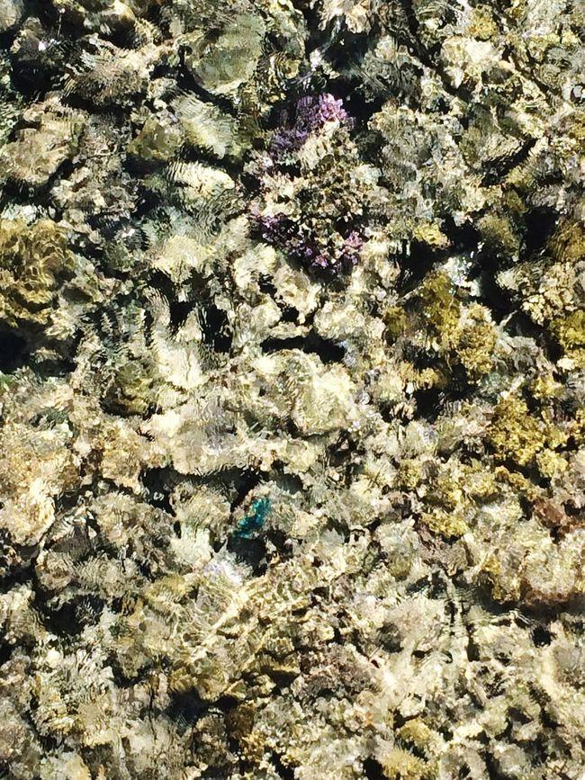 🌊 Red Sea Red Sea Memories Sea Beautiful Beach Coral Holiday Diving Snorkeling Egypt Wanderlust Dreaming