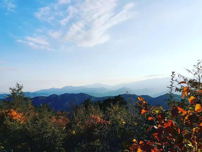 View from Mount Takao Multi Colored Sky Tree Social Issues No People Outdoors Sunset Tranquility Nature Cloud - Sky Day