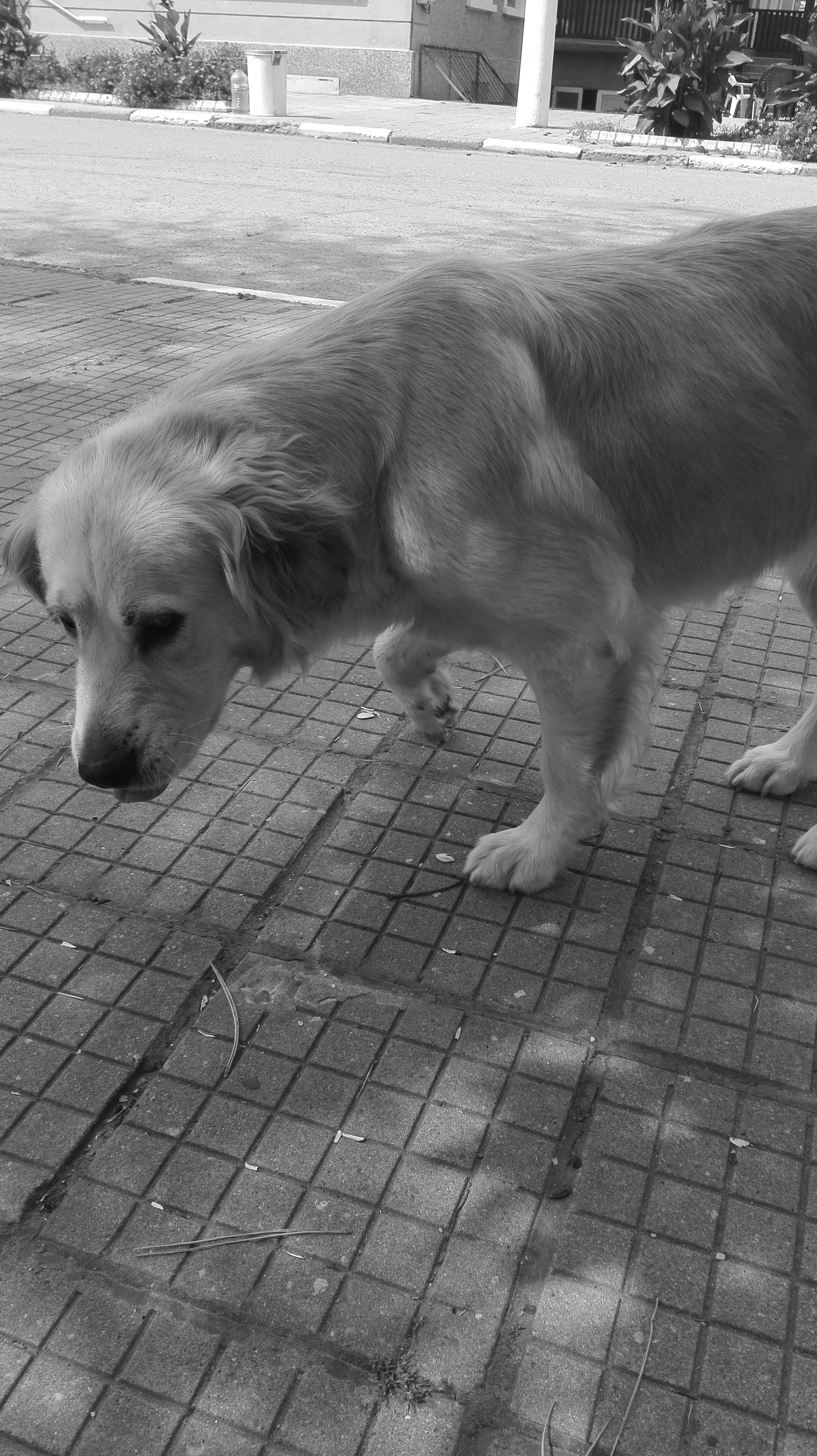 dog, animal themes, domestic animals, pets, mammal, one animal, day, no people, outdoors, nature, close-up