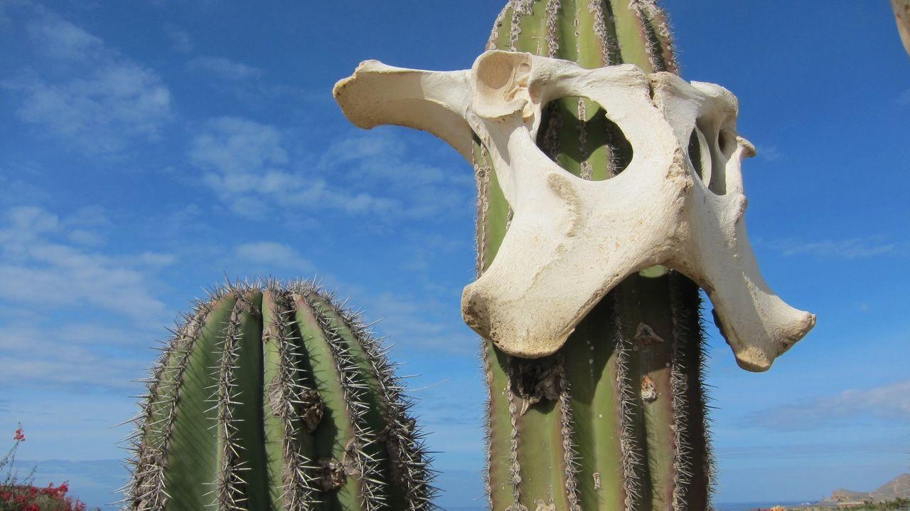 Beautiful stock photos of death, Abandoned, Animal Bone, Animal Skeleton, Animal Skull