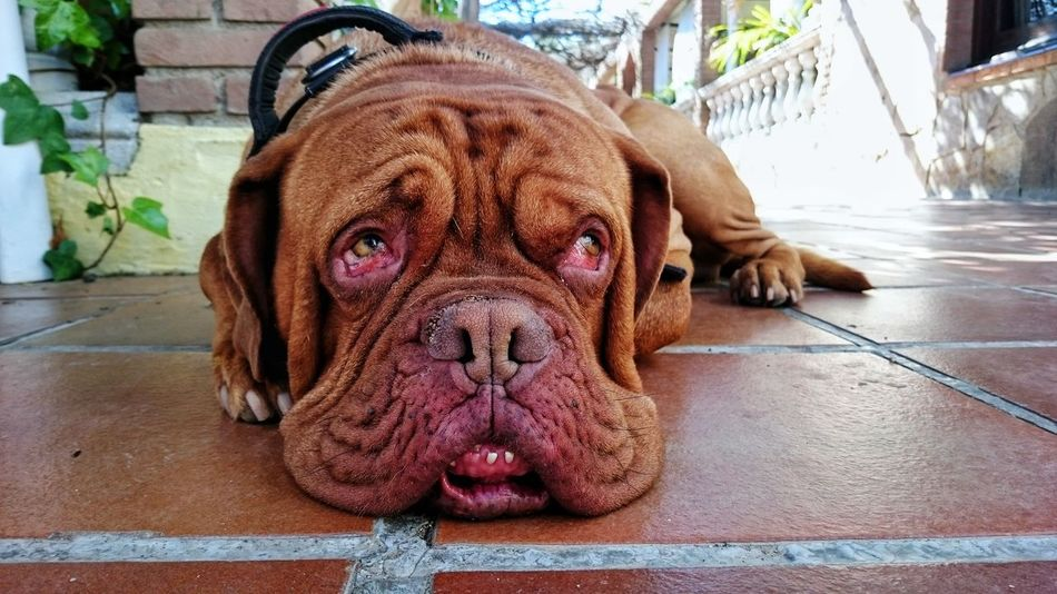 Dog siesta! Dogslife Dog Pets Brown Rest Siesta Animal Themes Cockles