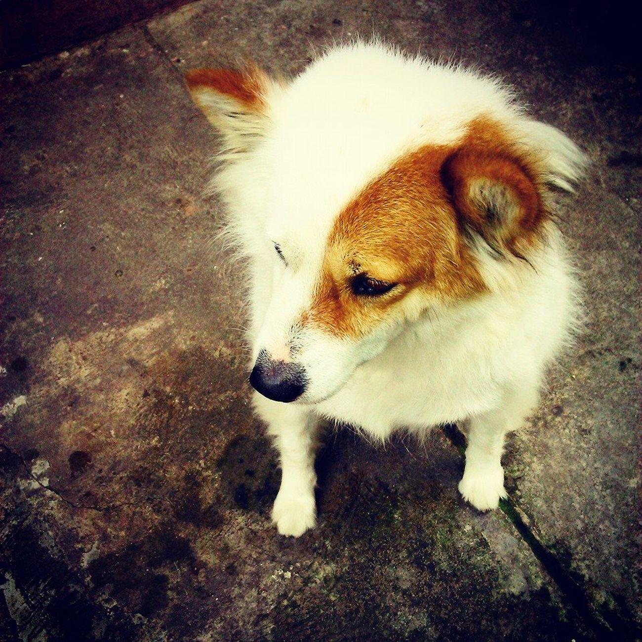 Taking Photos Lovely Kin Love♥ Dog Cute Dalat Cute♡ Cute Pets Cute Dog