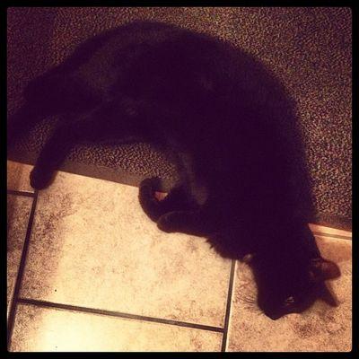 Darf ich vorstellen: Günther! (leider nicht meiner) Cat Cats Kitten Catstagram BLackCat Catsofinstagram Igcats