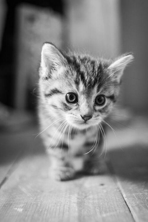 Un nuovo giorno da scoprire... Hello World Goodmorning EyeEm  Enjoying Life EyeEm Best Pics EyeEm Best Edits EyeEm Gallery Eye4photography  Mycat Eeyem_cat Cat Lovers