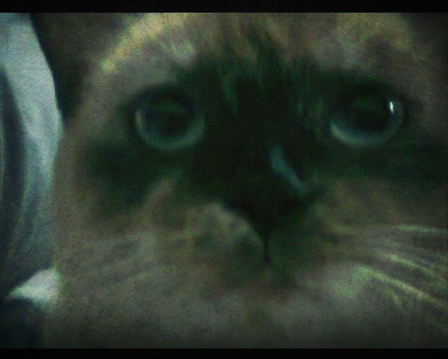 Misha Kitty
