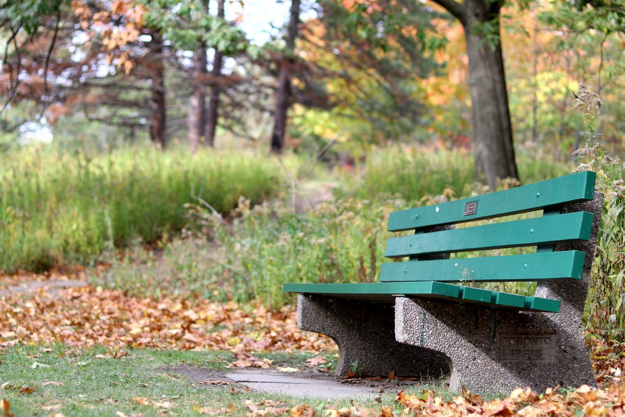 Bench Park Bench No People Outdoors Nature Tranquility Day Relaxation Grass Beauty In Nature Tree Nature Toronto Low Angle View