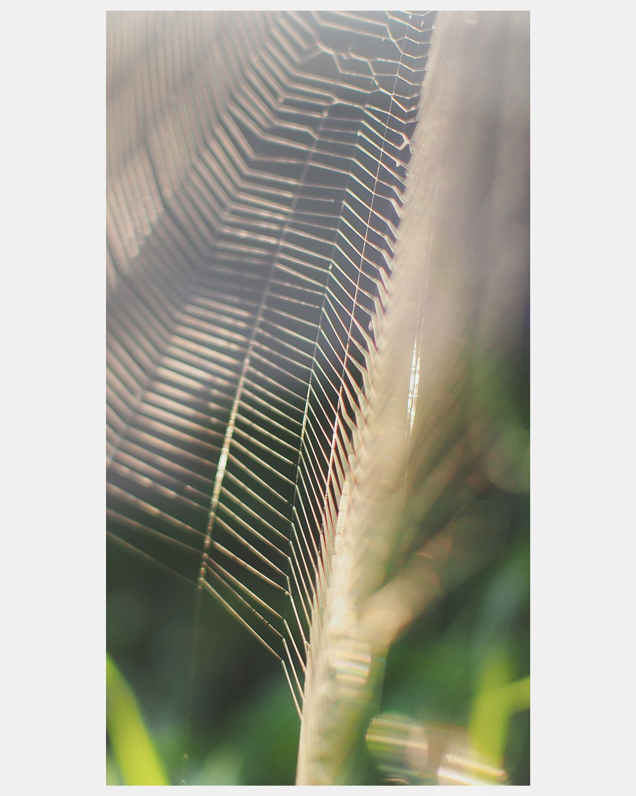 Close-up Selective Focus Plant Nature Green Color Outdoors Leaf Focus On Foreground Beauty In Nature No People Spiderweb Morning Morning Light Day EyeEm Nature Lover Nature Photography Macro