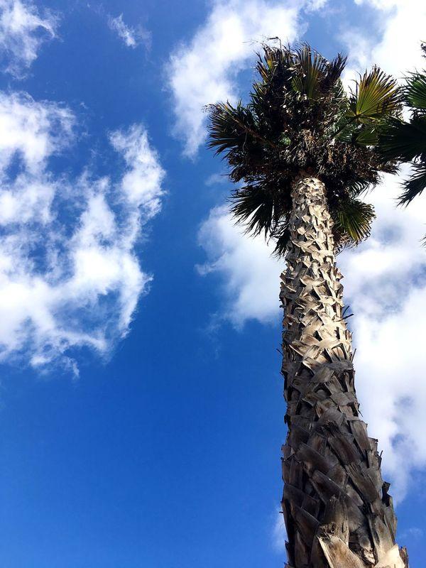 Palm Tree Summer ☀ Blue Sky Sky And Palm Tree Low Angle View Low Angle View Of Palm Tree South Europe Maltaphotography Low Angle View