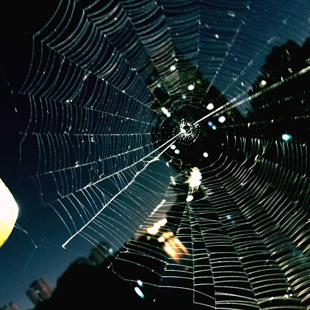 Spider Web Spider Web One Animal Insect Outdoors Animal Themes Backgrounds No People Nature Fragility Close-up Day