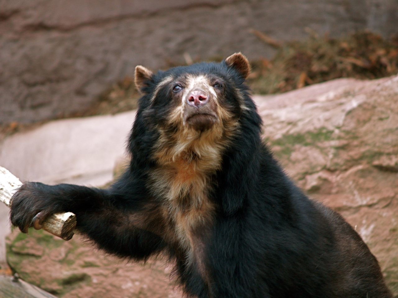 Beautiful stock photos of bear, Animal Themes, Animals In The Wild, Black, Brown