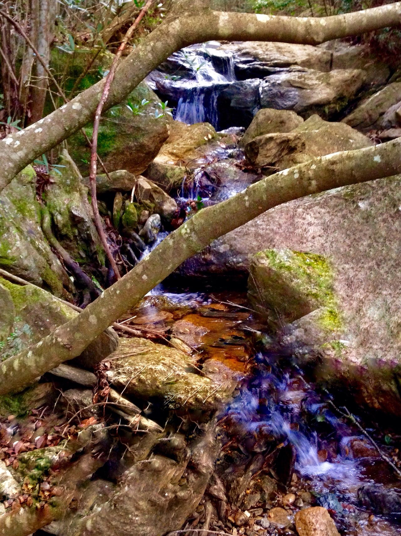 Creekside Trail Mother Nature Nature High Angle View Saikai City Japan No People Tree Water Outdoors Day Beauty In Nature