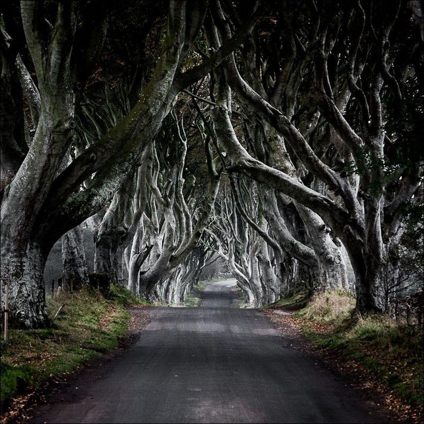 On The Road DarkHedges Northern Ireland