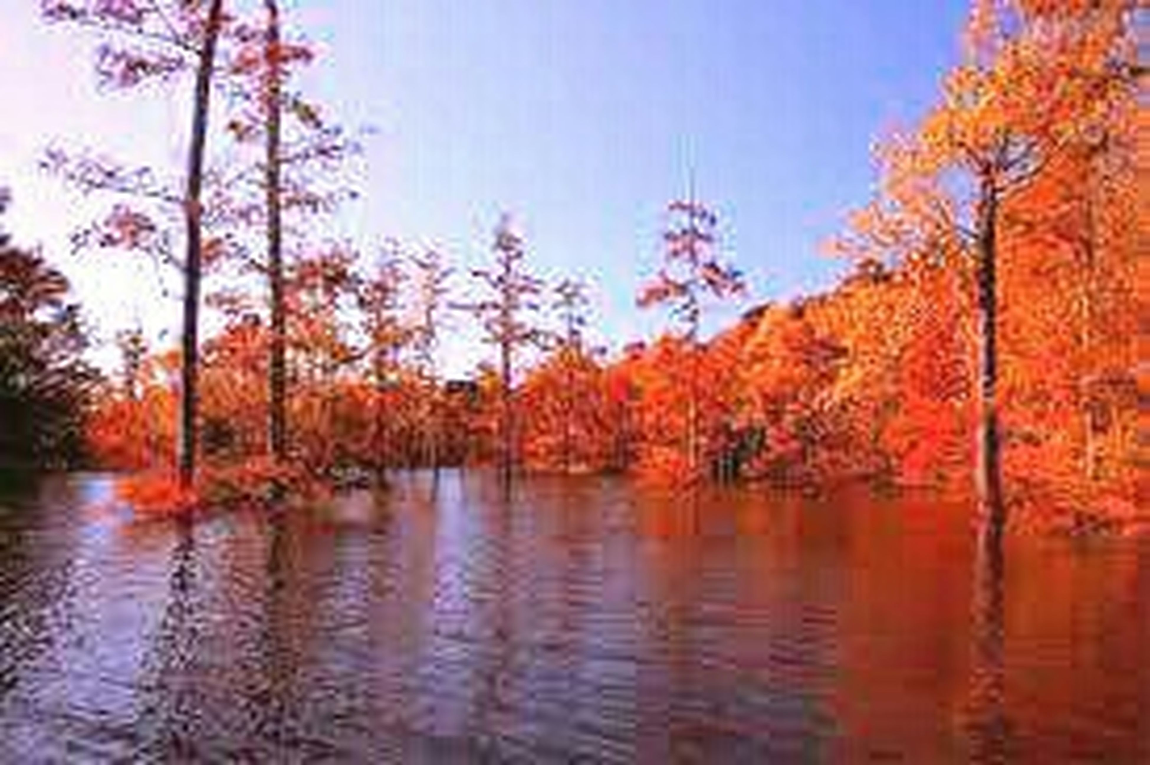 tree, water, tranquility, lake, autumn, tranquil scene, waterfront, clear sky, beauty in nature, scenics, reflection, nature, change, orange color, growth, idyllic, red, sky, river, outdoors