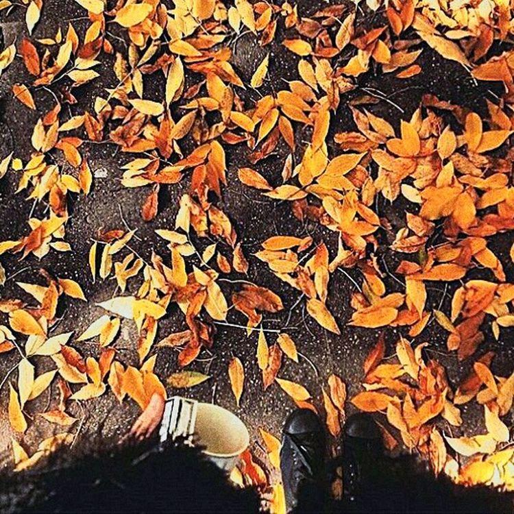 Autumn Autumn Colors Autumn Leaves That's Me Enjoying Life September Art Photography Me Blackfashion
