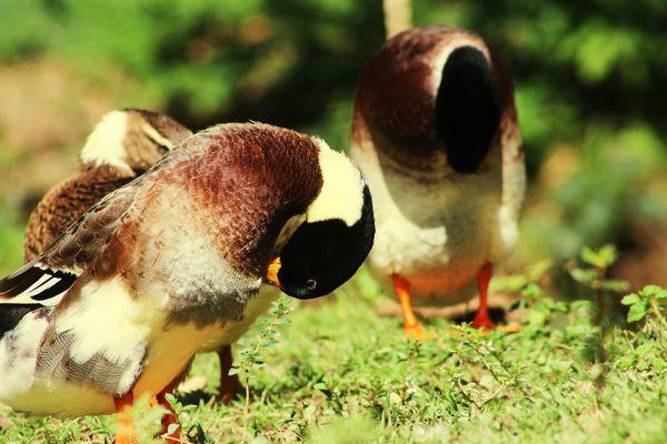 EyeEm Selects Animal Wildlife Animals In The Wild Fresh On Eyeem  Animal Themes
