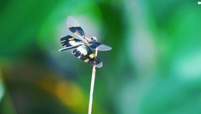 MyClick Photography Nature Butterfly Green Canon1800D Kottayam