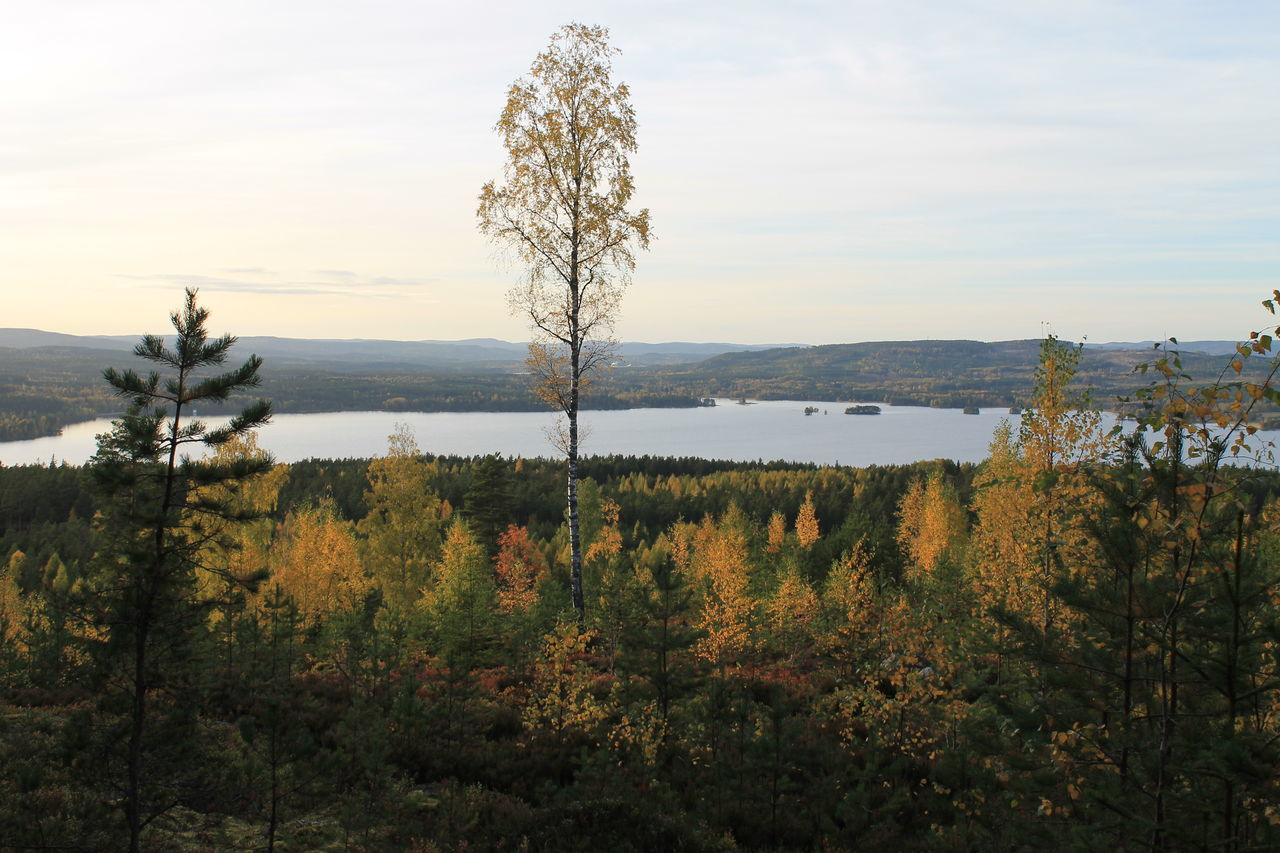 Beauty In Nature Dalarna Falun Favourite Places Källviken La Lake Landscapes Nature Outdoors Sunset Sweden Tranquil Scene Tranquility Tree Up On The Hill Water