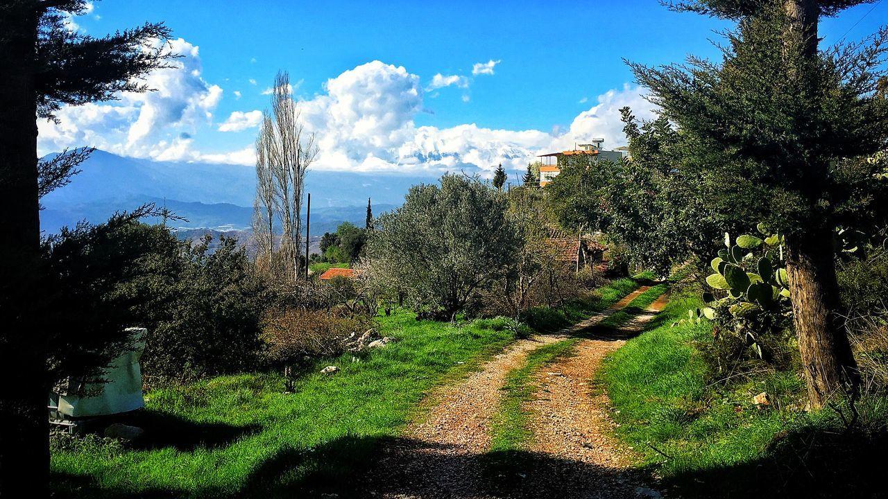 Tree Kumlucaolimpos Nature Sky Beauty In Nature Sunlight Day Mountain Antalya Turkey