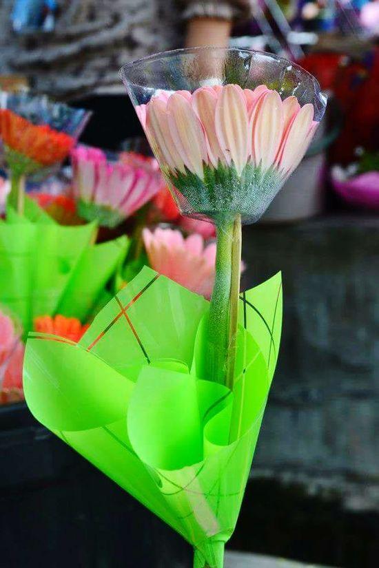 Flower Taking Photos Malaysia Plants 🌱 Moments Doityourself