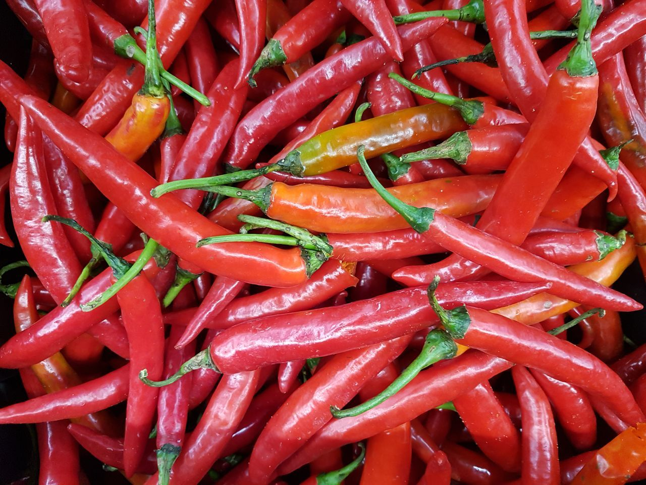 Red Chillies Chilly Agronomy Agriculture Agricultural Plants Full Frame Food Freshness Vegetable Healthy Eating Close-up Still Life Greens