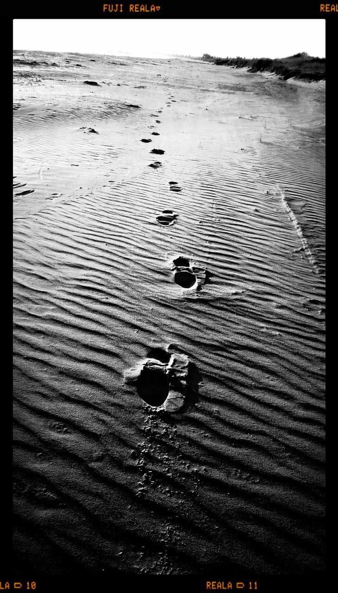 Beach Water High Angle View Nature Outdoors Tranquility Sea No People Day Beauty In Nature Denmark 🇩🇰 Danmark My Life Nordjylland Blackandwhite Black And White EyeEm Nature Lover EyeEm