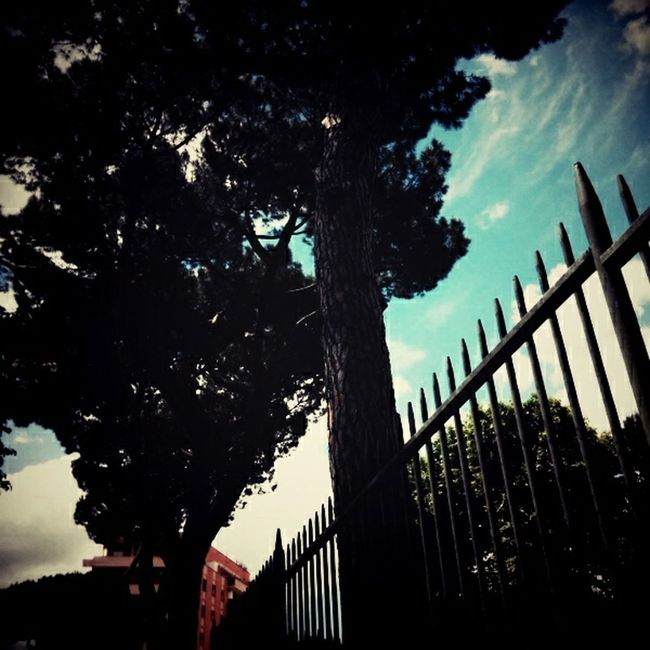 Trees Sky And Clouds Skyline Silhouette Plants City View  Backlight Street Photography Urban Photography Contrast