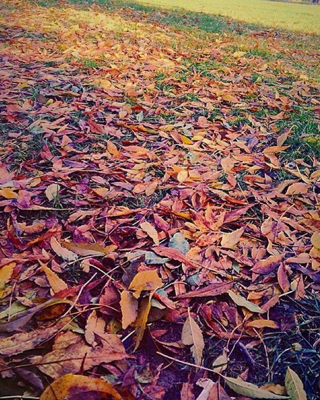 Flower Head Season  Springtime Vibrant Color Autumn Leaf Dry Change Fallen Field Natural Condition Backgrounds Natural Pattern