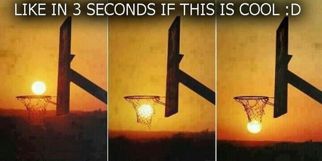 The Life Of A Hooper