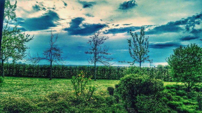 Let's Do It Chic! Respect For The Good Taste Wolken Baum 🌳🌲 Wolkenbilder Ein Baum Natur