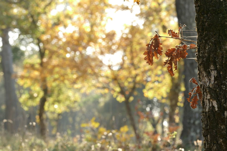 The last Autumn Beauty In Nature Branch Colors Depth Of Field EyeEm Best Shots Fragility Nature Outdoors Photography Tranquility Tree