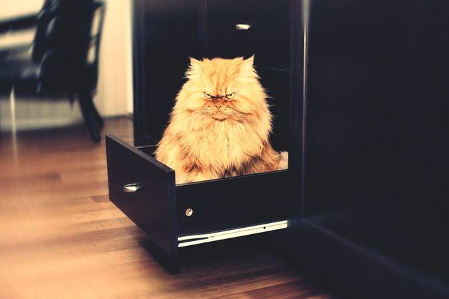 домашние животные кот