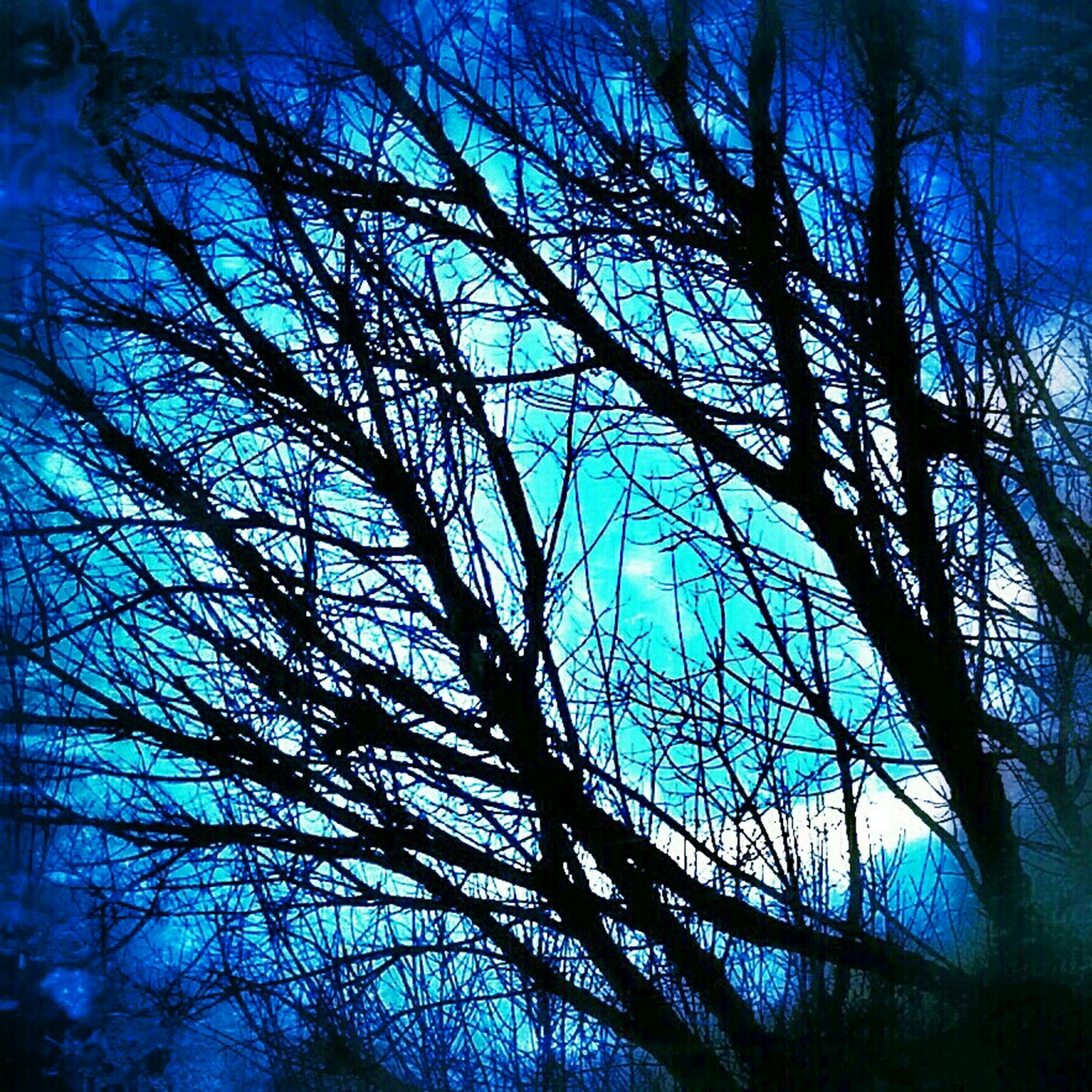 low angle view, bare tree, tree, branch, blue, silhouette, sky, nature, tranquility, backgrounds, full frame, outdoors, beauty in nature, no people, tree trunk, growth, day, scenics, clear sky, sunlight